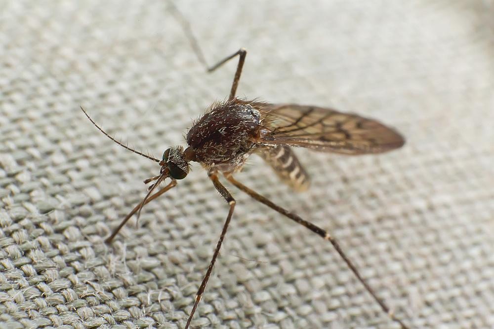 Jedyna skuteczna walka z komarami!